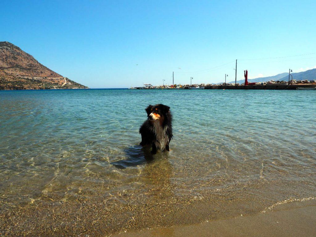 Shana am Meer